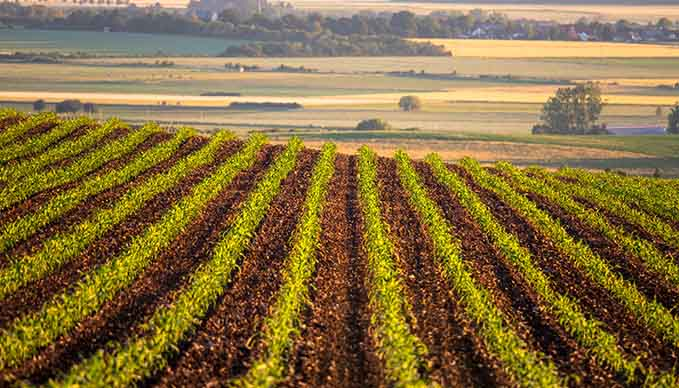 Crop Insurance: A Make or Break Decision