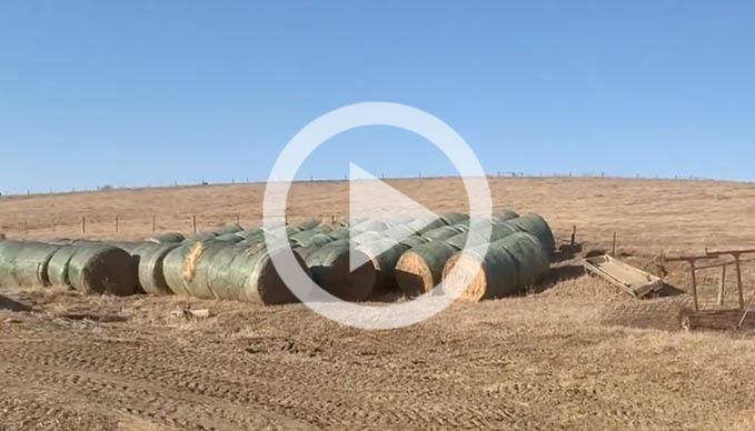 Field Report: Kelly Garrett Practices Regenerative Agriculture