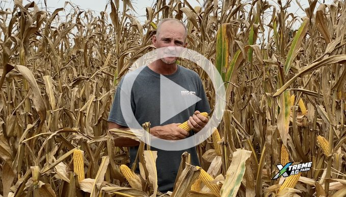 Why Is Chad Growing Business Park Corn?