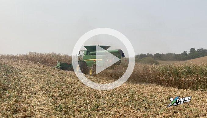 Harvesting High Moisture Corn