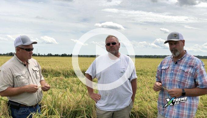 Surveying Hurricane Damage in Matt's Rice