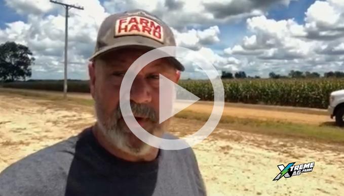 Moisture Testing Corn