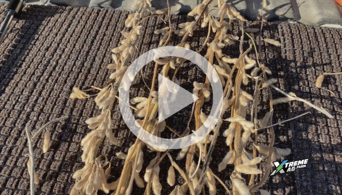 Soybean Trial Overview