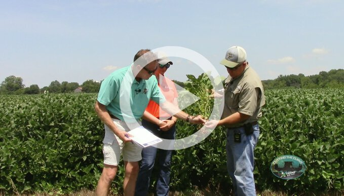 The Benefits Of Proper Fungicide Treatment In Soybeans