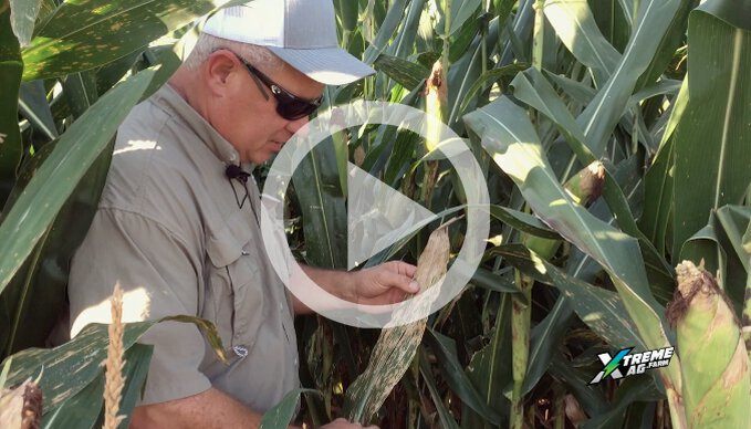 Scouting and Controlling Yield Limiting Leaf Diseases