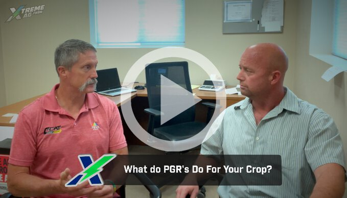 What does a PGR really do?