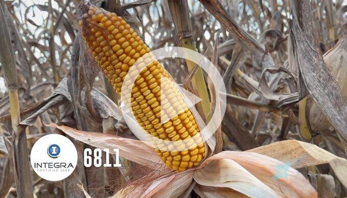 High Production Corn Plot