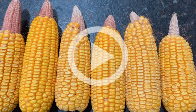 Where is the Rest of the Corn?